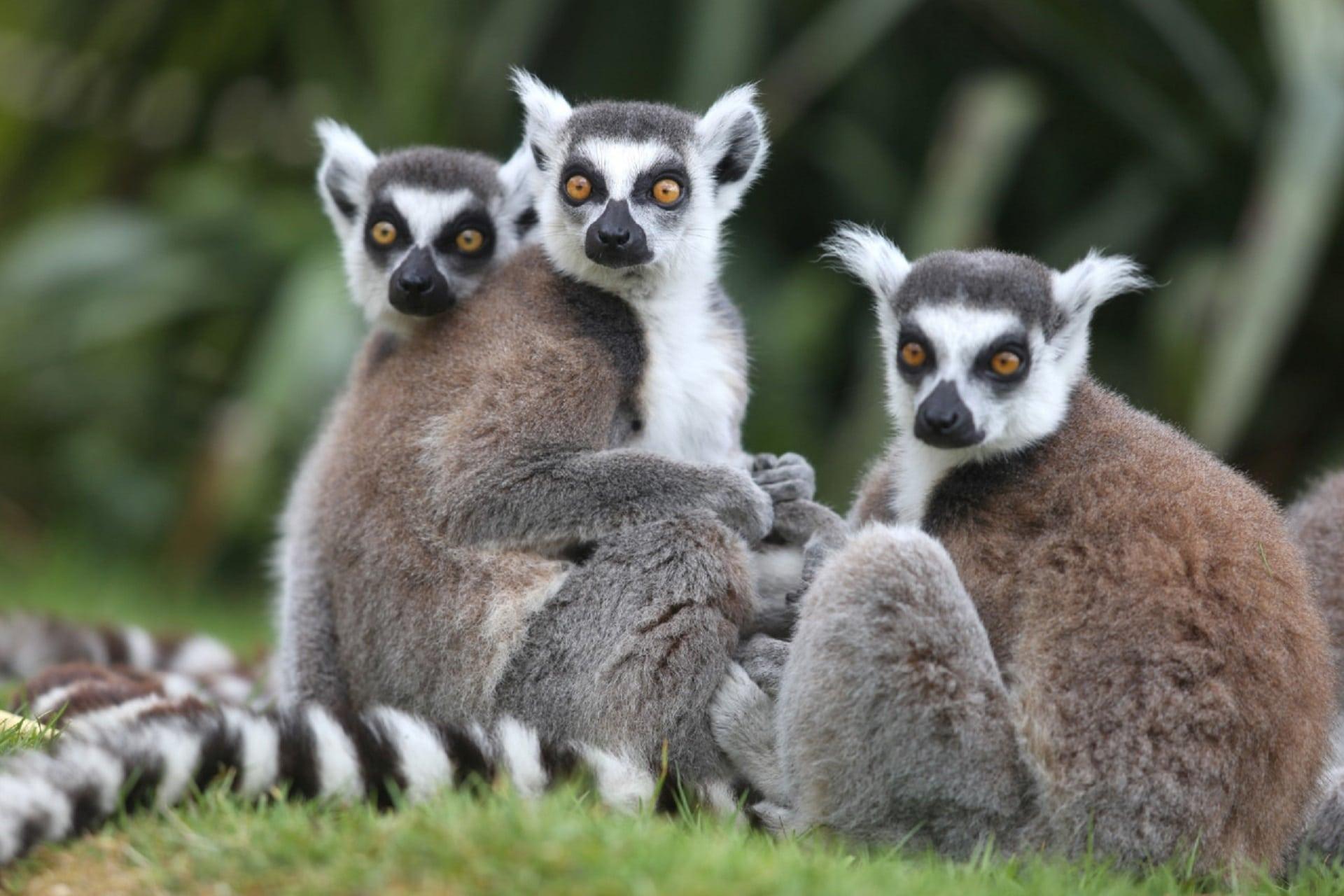 Zoo Champrépus